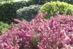 2018-04-14 A Poole Garden in Spring.  (14)014