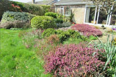 2018-04-14 A Poole Garden in Spring.  (18)018
