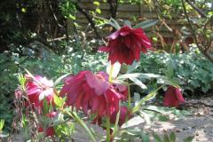 2018-04-14 A Poole Garden in Spring.  (28)028