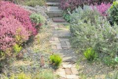 2018-04-14 A Poole Garden in Spring.  (3)003