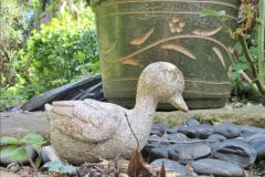 2018-04-14 A Poole Garden in Spring.  (39)039