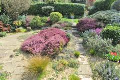 2018-04-14 A Poole Garden in Spring.  (4)004