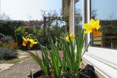 2018-04-14 A Poole Garden in Spring.  (54)054