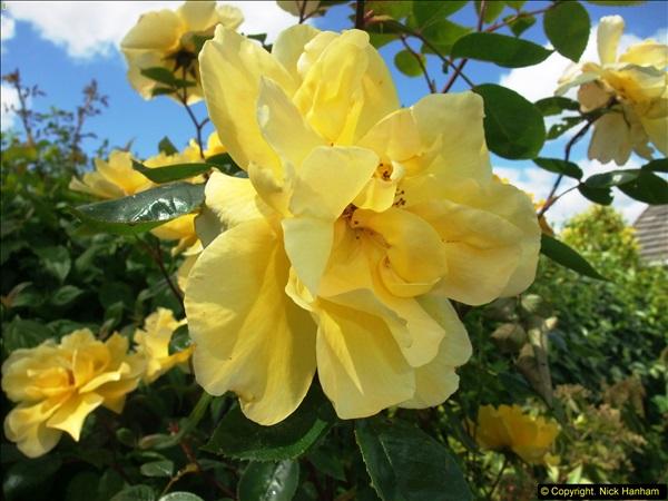 2015-06-07 A Poole Garden June 2015. (21)21