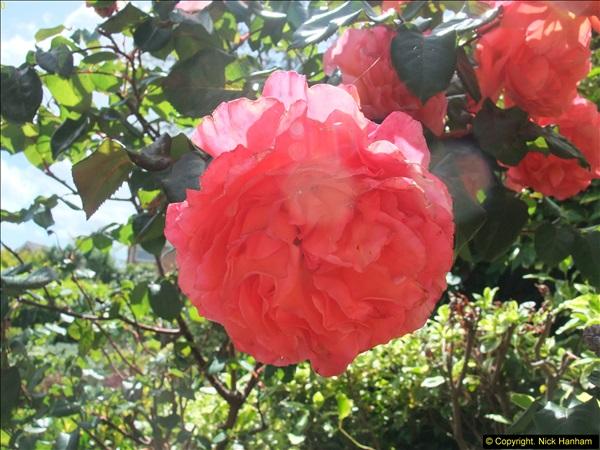2015-06-07 A Poole Garden June 2015. (29)29