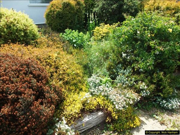2015-06-07 A Poole Garden June 2015. (4)04