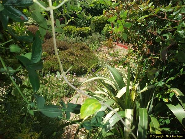 2015-06-07 A Poole Garden June 2015. (42)42