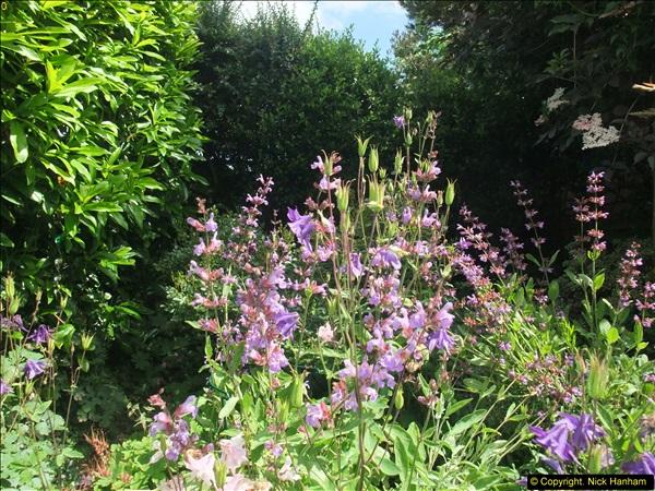 2015-06-07 A Poole Garden June 2015. (47)47