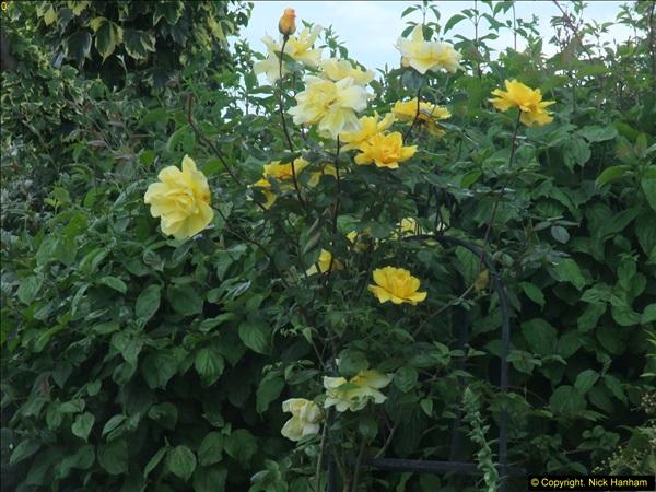 2015-06-07 A Poole Garden June 2015. (79)79