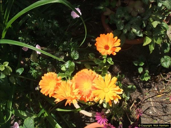 2015-06-07 A Poole Garden June 2015. (24)24