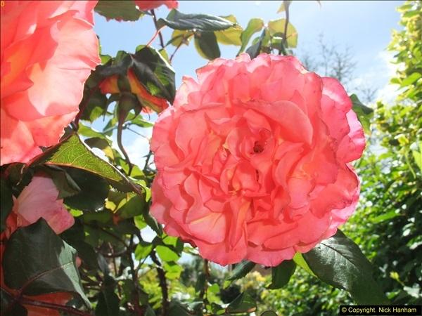 2015-06-07 A Poole Garden June 2015. (28)28