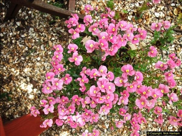 2015-06-07 A Poole Garden June 2015. (37)37
