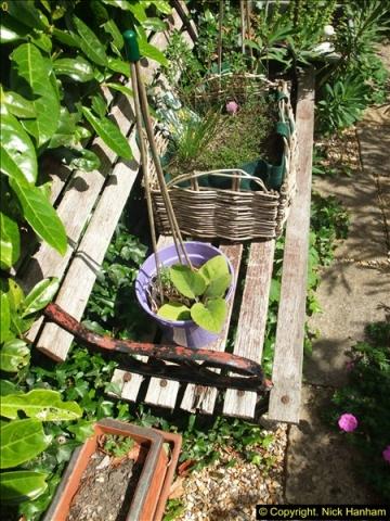 2015-06-07 A Poole Garden June 2015. (46)46