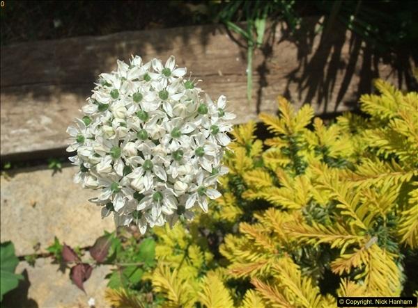 2015-06-07 A Poole Garden June 2015. (67)67