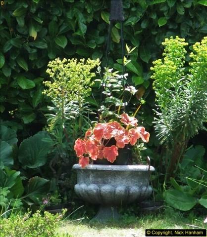 2015-06-07 A Poole Garden June 2015. (73)73