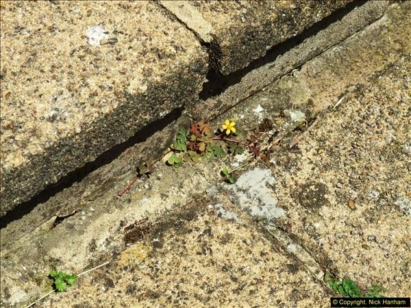 2015-06-07 A Poole Garden June 2015. (80)80