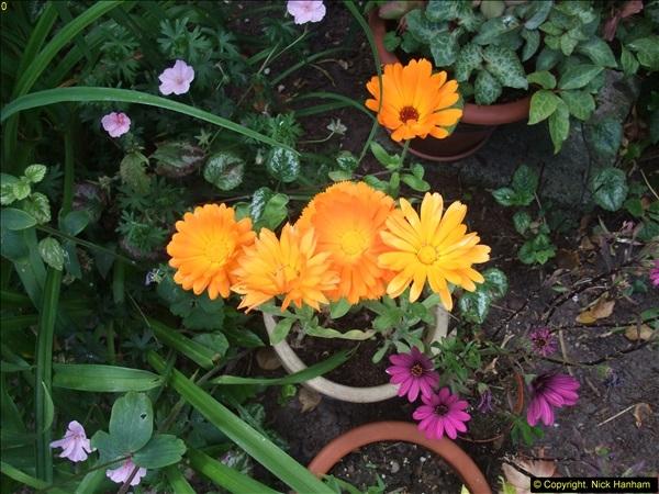 2015-06-07 A Poole Garden June 2015. (84)84