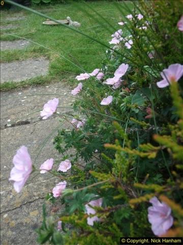 2015-06-07 A Poole Garden June 2015. (87)87