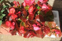 2015-06-07 A Poole Garden June 2015. (55)55