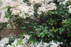 2015-06-07 A Poole Garden June 2015. (57)57