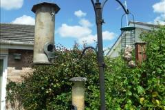 2015-06-07 A Poole Garden June 2015. (65)65