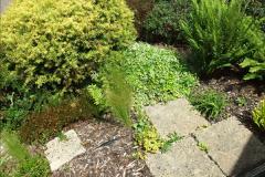 2015-06-07 A Poole Garden June 2015. (8)08