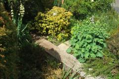 2015-06-07 A Poole Garden June 2015. (9)09
