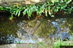 2016-07-14 A country and seaside walk in Poole, Dorset.  (22)022