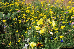 2016-07-14 A country and seaside walk in Poole, Dorset.  (47)047