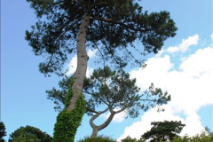 2016-07-14 A country and seaside walk in Poole, Dorset.  (76)076