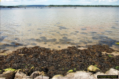 2016-07-14 A country and seaside walk in Poole, Dorset.  (80)080