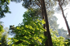 2016-07-20 A continuation of the Poole country to seaside and return walk. (67a) (18)117