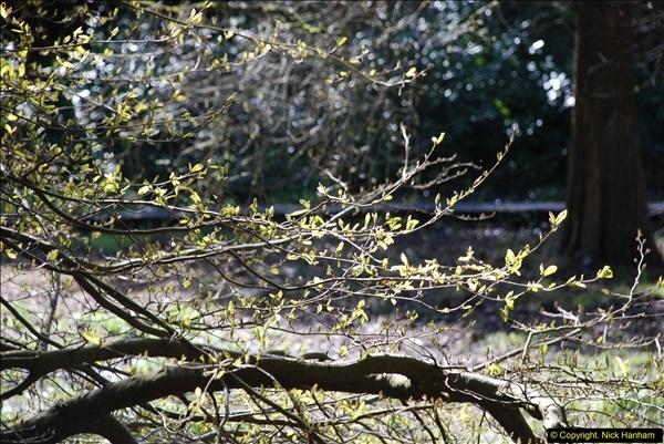 2016-03-25 A Spring walk.  (20)020