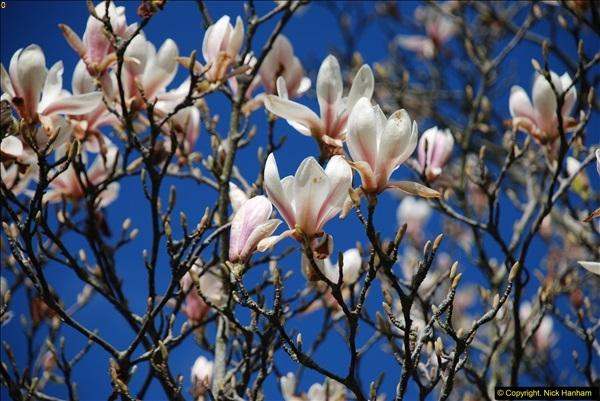 2016-03-25 A Spring walk.  (208)208