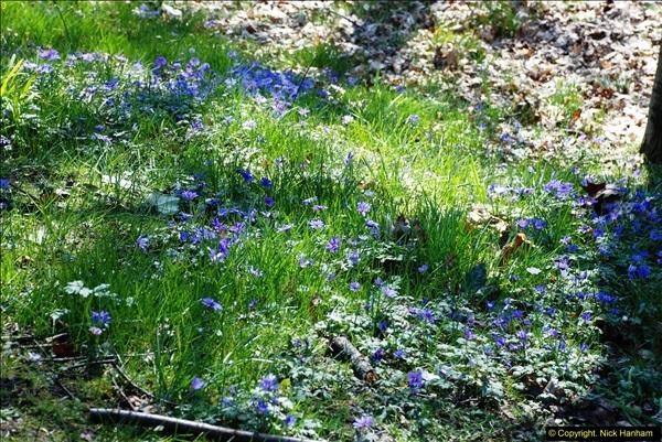 2016-03-25 A Spring walk.  (25)025