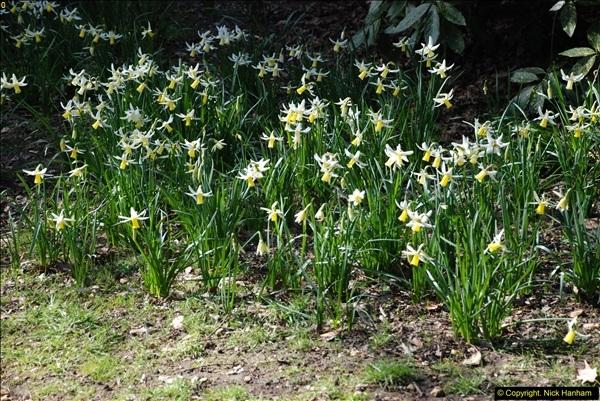 2016-03-25 A Spring walk.  (258)258