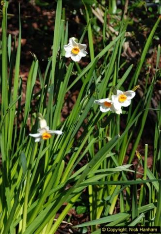 2016-03-25 A Spring walk.  (58)058