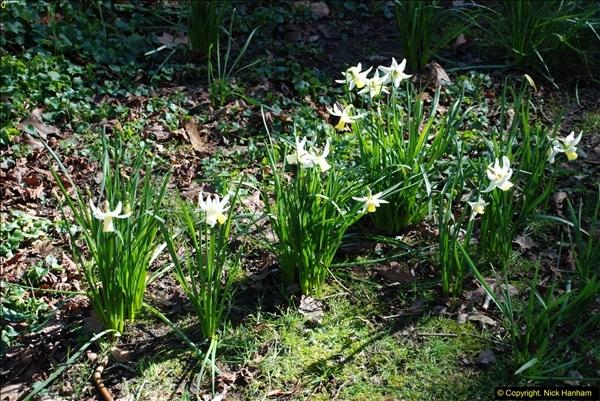 2016-03-25 A Spring walk.  (6)006