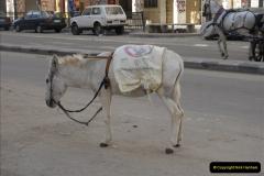 2011-11-07 to 08 Alexandria, Egypt.  (43)