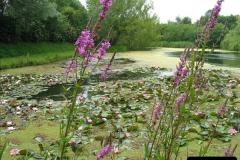 2007-07-12 Bennets Water Gardens, Weymouth, Dorset. (26)278