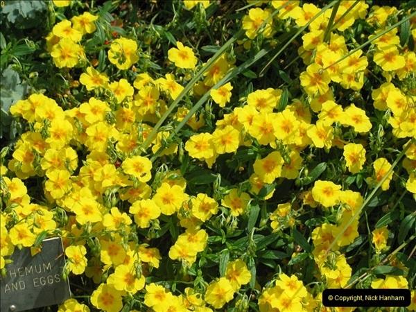 2004-06-09 Wisley RHS.  (10)010