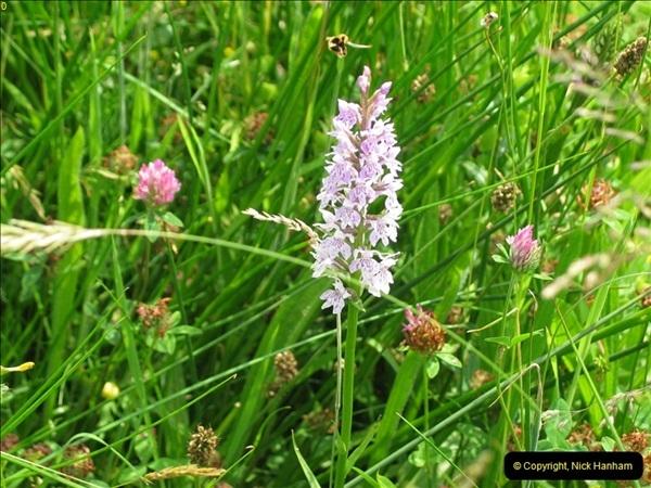 2004-06-09 Wisley RHS.  (25)025