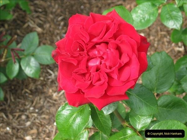 2004-06-09 Wisley RHS.  (61)061