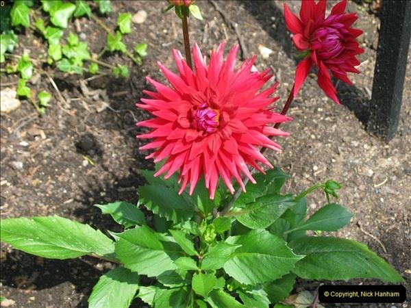 2004-06-09 Wisley RHS.  (9)009