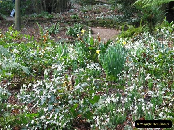 2005-02-01 Snow Drops @ Kingston Lacy House, Wimborne, Dorset. (1)082