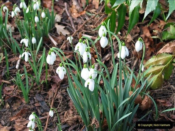 2005-02-01 Snow Drops @ Kingston Lacy House, Wimborne, Dorset. (2)083