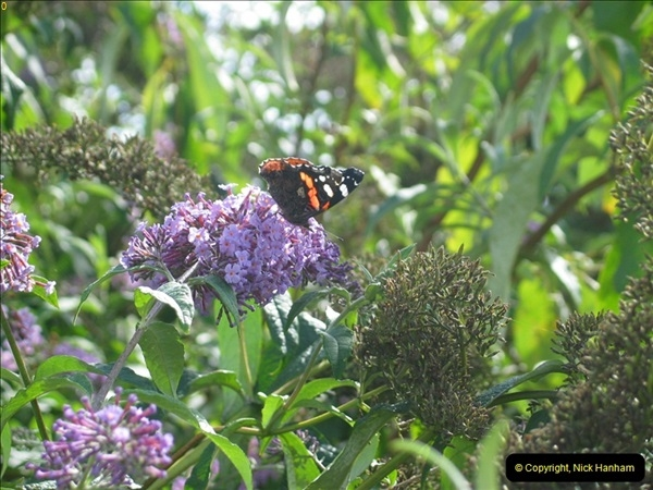2005-09-05 Lodmore Nature Park guided walk, Weymouth, Dorset.  (13)106