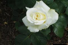 2004-06-09 Wisley RHS.  (59)059