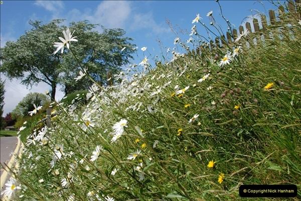 2009-05-19 Sandbanks & Studland, Dorset.  (25)025