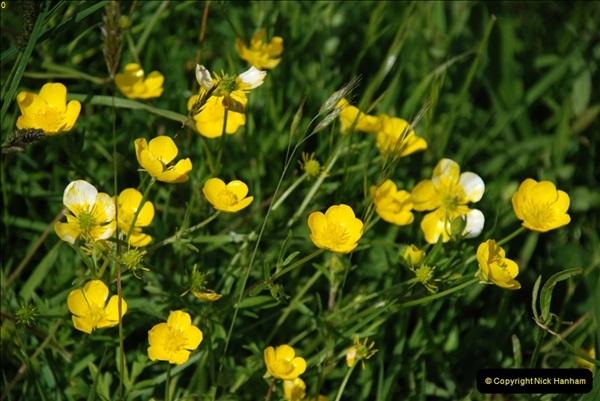 2009-05-19 Sandbanks & Studland, Dorset.  (30)030